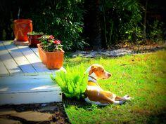Relaxing in the backyard...