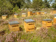 Vidéos sur la pratique de ruches warré (gilles denis)