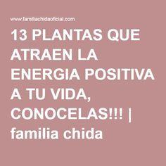 13 PLANTAS QUE ATRAEN LA ENERGIA POSITIVA A TU VIDA, CONOCELAS!!!   familia chida