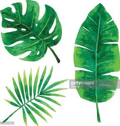 illustration of tropical plants leaf. (Diy Art Watercolor) patterned plants: Vector illustration of tropical plants leaf.patterned plants: Vector illustration of tropical plants leaf. Watercolor Plants, Watercolor Leaves, Watercolor Paintings, Watercolor Wallpaper, Watercolor Pattern, Watercolor Design, Leaf Drawing, Plant Drawing, Drawing Flowers