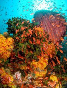 Wakatobi Diving Resort, Indonesia -