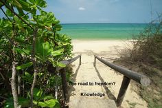 Cum să călătorești mai mult și să fii plătit să vezi lumea (curs) It's FREE! Freedom, Adventure, Luxury, World, Plants, Rock, Liberty, Political Freedom, Locks
