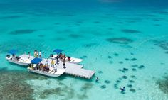 Stingray City, Antigua -  Just got to do this on my cruise for spring break! Amazing experience!