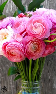 Ranunculus mean charm. Pink ranunculus mean extra charm. My Flower, Fresh Flowers, Pink Flowers, Beautiful Flowers, Ranunculus Flowers, Beautiful Bouquets, Pink Peonies, Summer Flowers, Peony
