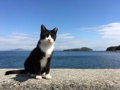 Manabe-shima Island (Okayama, Japan):真鍋島(岡山県)