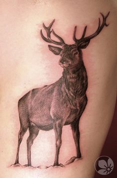 Sorce: http://springtattoo.com ------ deer tattoo  #tattoo #deer