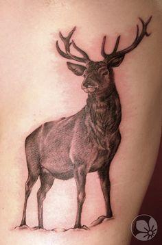 Sorce: http://springtattoo.com ------ deer tattoo  #tattoo #deer