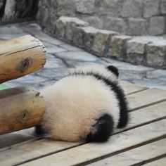 Pandas have the cutest tushes! Cute Baby Animals, Animals And Pets, Funny Animals, Interesting Animals, Cute Panda, Funny Animal Pictures, Spirit Animal, Animals Beautiful, Mammals
