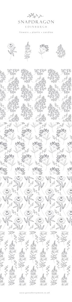 Logo, illustration and pattern design for florist Snapdragon Edinburgh