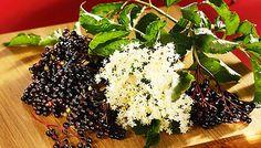 A 7 legjobb természetes tipp kínzó aranyér ellen | femina.hu Seaweed Salad, Herbalism, Healing, Ethnic Recipes, Food, Garden, Girdles, Alternative, Herbal Medicine