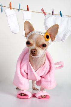 dogs in funny clothes - always funny :)