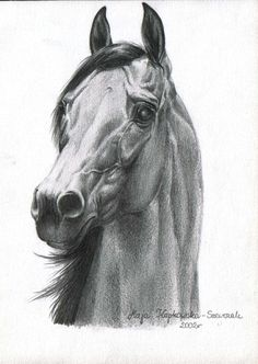 pencil, arabian horse by terrie Horse Pencil Drawing, Pencil Drawings Of Girls, Horse Drawings, Animal Drawings, Art Drawings, Pencil Art, Horse Sketch, Desenho Tattoo, Cowboy Art