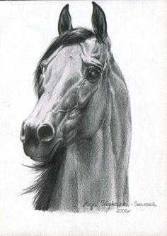 pencil, arabian horse