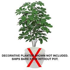3'8' IFR Schefflera Artificial Tree -Green (pack of 4) -- You can get additional details at the image link.