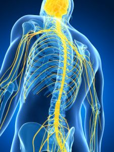 Network Spinal Analysis and Fibromyalgia