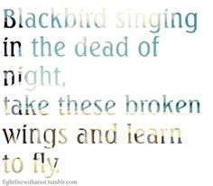 blackbird - the beatles Best Song Ever, Greatest Songs, Some Good Quotes, Best Quotes, Cool Words, Wise Words, Beatles One, Lyrics To Live By, Music Lyrics