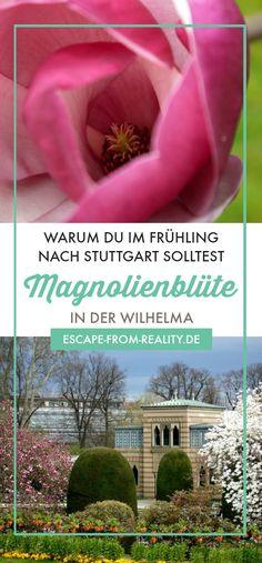 wie man serch 100% authentisch billiger Verkauf 13 Best *Only in Stuttgart* images in 2019   Stuttgart ...