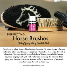 Disinfecting Horse Brushes using Young Living Essential oils... www.theessentialhorse.com