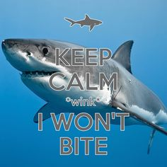 keep calm *wink* i won't bite / created with Keep Calm and Carry On for iOS…