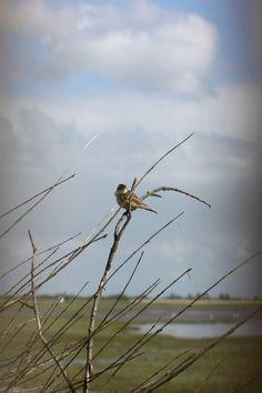 Rietzanger bij lsuwersmeer