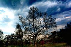 Stormy Sky, handsome landscape at Neshaminy State Park.