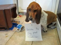 """I broke the dog proof trash can.""  There's no such thing as a dog-proof trashcan"