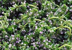Whether you need extra protection for your garden or your skin, these herbs and flowers can help shoo away pests.