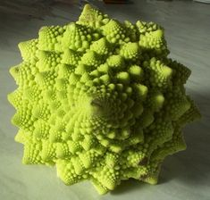 An example of a Fibonacci sequence making spiral patterns in nature.   This is also a fractal because each floret is an identical but smaller version of the whole thing & this makes the spirals easy to see.