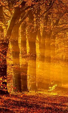 Sun Rays on an autumn morning Naranja bosque All Nature, Amazing Nature, Beautiful World, Beautiful Places, Autumn Morning, Early Morning, Autumn Painting, Belle Photo, Beautiful Landscapes