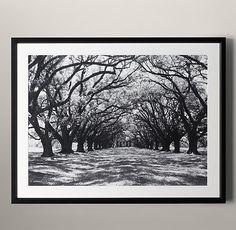 Philip Gendreau: Oak Alley Plantation