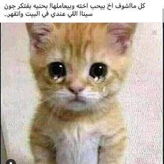 ضحك حتى البكاء ضحك جزائري ضحك حتى البول ضحك معنى ضحك اطفال فوائد الضحك ضحك Meaning الضحك في المنام نكت قصيرة نكت Arabic Funny Funny Picture Jokes Funny Qoutes