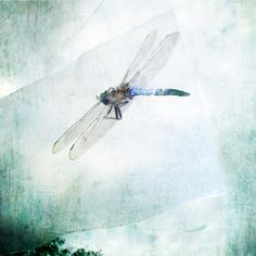 Still life photography Dragonfly photograph by ZenzPhotography,