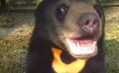 Daily Cute: Murphy the Rescued Sun Bear Will Make You Smile | Care2 Causes