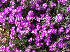 PEDRO MIGUEL CRUZ´S BLOG: Mente Plants, Blog, Books, Blogging, Plant, Planets