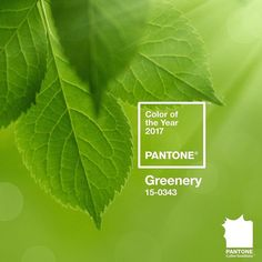Pantone Color of the Year 2017 - Greenery Pantone A refreshing and revitalising shade, Greenery is symbolic of new beginnings. Partner with Pantone. Color Of The Year 2017 Pantone, Pantone Color, Color 2017, Pantone 2015, Colour Schemes, Color Trends, Color Palettes, Verde Greenery, Greenery Decor
