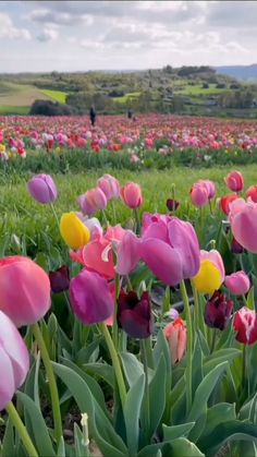 Beautiful Rose Flowers, Beautiful Flower Arrangements, Amazing Flowers, Beautiful Gardens, Beautiful Flowers, Beautiful Nature Pictures, Beautiful Nature Scenes, Amazing Nature, Wallpaper Nature Flowers