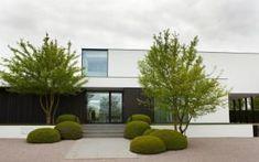 Acer campestre meerstammig - All For Garden Modern Landscape Design, Landscape Plans, Modern Landscaping, Landscape Architecture, Contemporary Design, Front Yard Patio, Front Yard Landscaping, Garden Care, Minimalist Garden