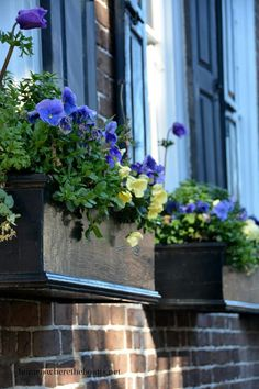 blue shutters and beautiful blue pansys in a dark window box