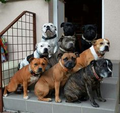 Hey, I can't even get one of mine to sit still for a photo! I'm jealous.