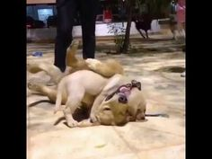 Okay, okay, you win! Funny Dogs Fighting For Hugs -  #dogs #funnydogs #puppy #doglover #animals #pet #cute #pets #animales #tagsforlikes Stop Your Dog's Behavior Problems! Click HERE to learn how! Okay, okay, you win! Funny Dogs Fighting For Hugs  - #Dogs