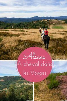 Balade à cheval dans les Vosges alsaciennes avec Cheval Alsace, centre de tourisme équestre situé en Alsace au Champ du Feu, à 1000m d'altitude