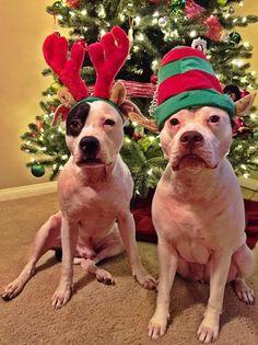 Adorable Santa Dogs
