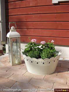 trädgård,blommor,ljuslykta,pelagoner,sommar