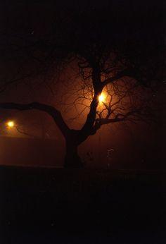 Silent Park