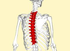 What's that Pain in Your Mid Back About?: Thoracic Spine