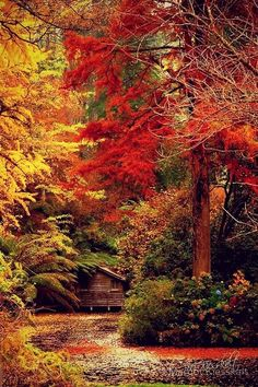 """Forest House, Dandenong Mountains, Australia """" fall colors are so beautiful. My absolute favorite season""""! Beautiful Places, Beautiful Pictures, Beautiful Scenery, Simply Beautiful, Absolutely Stunning, Autumn Scenery, Forest House, Forest Cabin, Forest Cottage"""