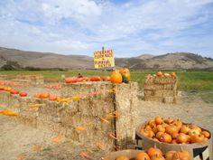 Corn Maze and Pumpkin Patch | Muzzi's Ranch Pumpkin Patch and Corn Maze