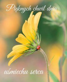 Good Morning, Dandelion, Flowers, Plants, Album, Polish, People, Buen Dia, Bonjour