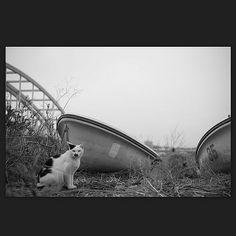 Cat April 2015 #cat #blackandwhitephotography