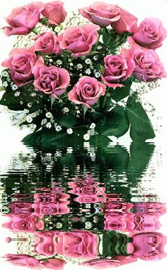 pink roses and babys breath on water Beautiful Rose Flowers, Love Rose, Beautiful Flowers, Beautiful Love Pictures, Beautiful Gif, Romantic Pictures, Rose Images, Rose Pictures, Roses Gif